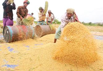 بعد زيادة أسعارها عالميا..توقعات بارتفاع أسعار الأرز والسكر في السوق المحلية