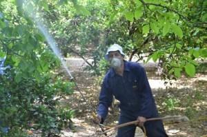 الزراعة تقرر وقف استخدام المبيد على محاصيل زراعية
