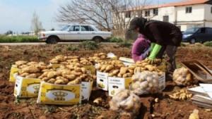 بعد انقطاعها لسنوات..النظام السوري يصدر البطاطا الى الاردن