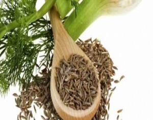 فوائد عشبة الشمر للتنحيف...4 فوائد صحية مذهلة!
