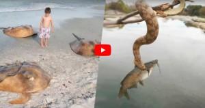 بالفيديو .. لماذا أستراليا هي أخطر دولة في العالم!!