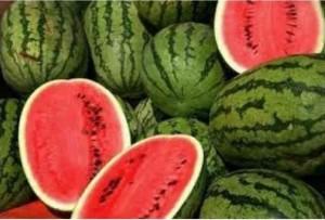 قطر تؤكد: البطيخ الأردني مطابق للمواصفات