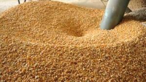 الحكومة تعفي مدخلات الانتاج الزراعي وتخفض ضريبة الذرة والاعلاف