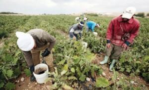 شروط حكومية جديدة لاستقدام العمالة الوافدة بالقطاع الزراعي