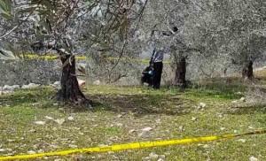 الأجهزة الأمنية تعثر على جثة مُعلقة بحبل على شجرة في الزرقاء