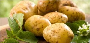 مادة سامة في البطاطا .. تعرفوا الى مدى خُطورتها