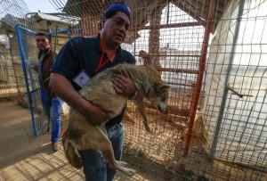 نقل حيوانات حديقة غزة إلى الأردن
