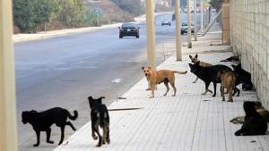 ماذا قالت الإفتاء عن حكم قتل الكلاب؟