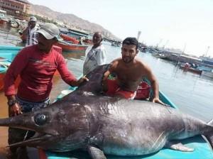 اصطياد أكبر سمكة في العقبة وزنها 312 كغم