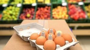ما هو الفرق بين البيض ذي القشرة البنية والقشرة البيضاء؟