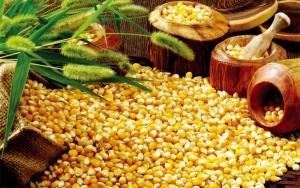 الزراعة ترفض ادخال 30 الف طن من الذره الصفراء
