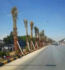 لفتة جميلة وراقية  من جامعة عمان الأهلية....  كتب : علي حياصات