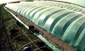 مستثمرون أردنيون يعتزمون نقل استثماراتهم الزراعية إلى «إسرائيل»