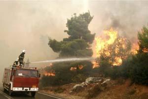 حريق يلتهم مئات أشجار البلوط المعمرة في بيرين