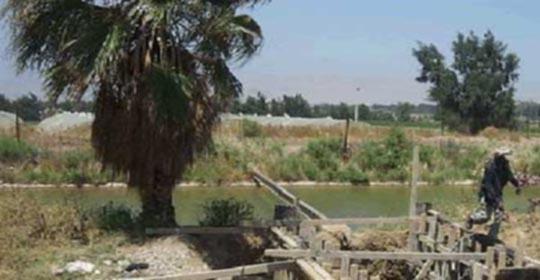 الكشف عن ضخ إسرائيل زيوت وشحوم أدت إلى تلوث قناة الغور الشرقية