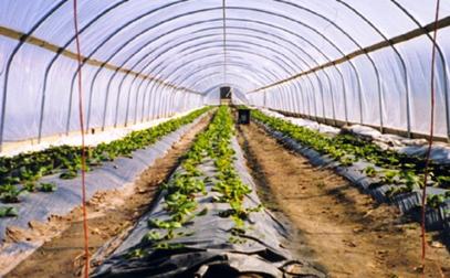 مخالفات في مشاريع زراعية مهمة جدا