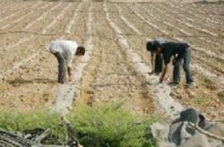 شركات الجنوب الزراعية تحت المجهر .. تجديد باشتراطات ام استملاك للمشاريع ?