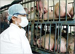 تعليق استيراد منتجات اللحوم من الدول المصابة بأنفلونزا الخنازير