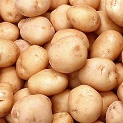 «الزراعة»: لا وجود لبطاطا اسرائيلية في الاسواق