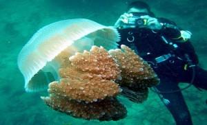 كاميرا حديثة للتصوير تحت الماء