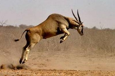 إسرائيل تطلق حيوانات ضخمة بالشمال لمواجهة مقاتلي حزب الله