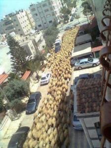 مسيرة حاشدة مؤيدة للنسور في عدم رفع سعر الاعلاف