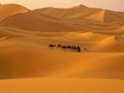 قصاصو أثر يعثرون على مواطن تاه في الصحراء الشرقية منذ 4 أيام