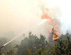 الحكومة تدرس امكانية تعويض مزارعي الاغوار المتضررين من الحرائق الاسرائيلية