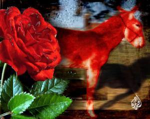 مواطنون في الرمثا يطلون حمارا بالأحمر تعبيرا عن رفض عيد الحب