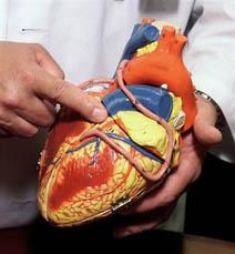 أرقام رسمية تؤكد اصابة 25 في المئة من الأردنيين بأمراض القلب